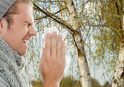 Allergiker alarmiert: Hohe Belastung durch Birkenpollen