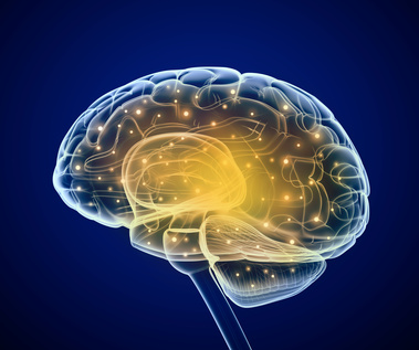 Grafik Gehirn