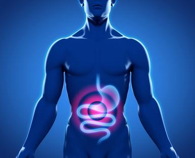 Laktobazillen als natürliches Mittel gegen Durchfallerkrankungen